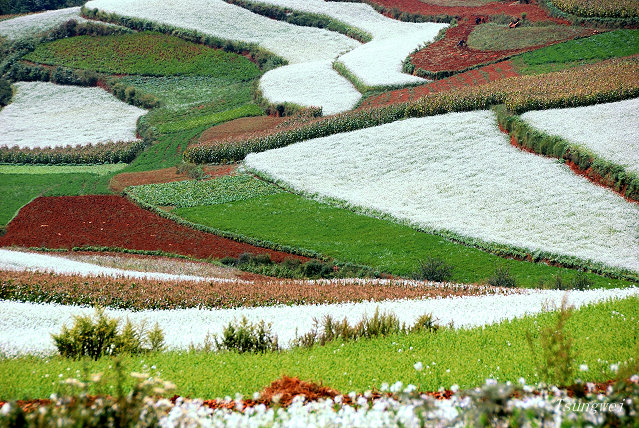 Tanah merah di Kunming membentuk mosaik indah ketika dikombinasi dengan tanaman aneka warna (2)