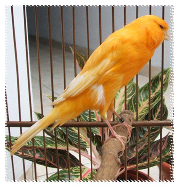 Tenggeran Burung