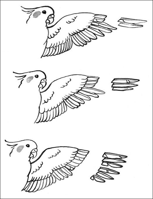 Tips Ringan Cara Menjinakkan Burung Parkit Om Kicau