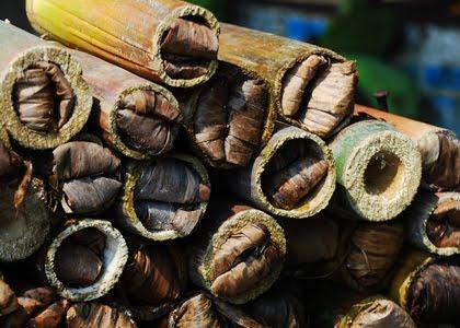 Ulat Bambu
