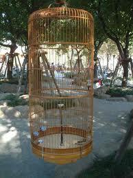 Kandang yang tepat memudahkan burung melakukan hoovering