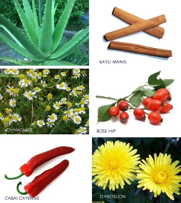 Berbagai tanaman herbal yang bermanfaat bagi burung