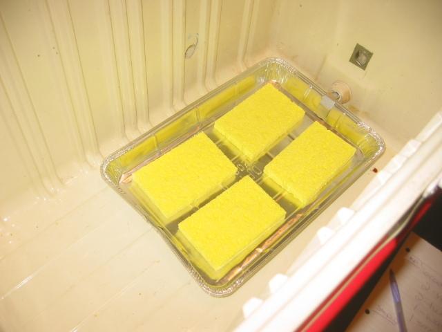 3. sponge