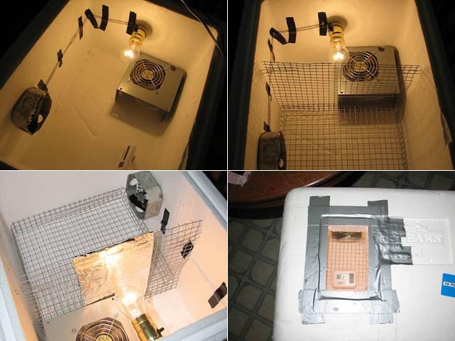 Inkubator sederhana dari box stereofoam