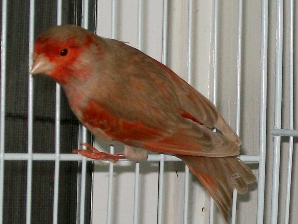 RED-ISABEL-PASTEL