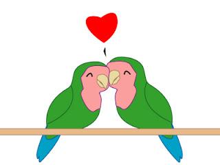 Tujuh Bekal Yang Mesti Digembol Penangkar Lovebird Om Kicau
