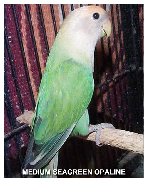 medium-seagreen-opaline