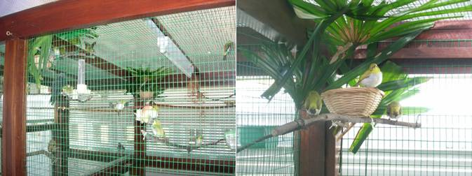 Kandang Pleci Model Aviary