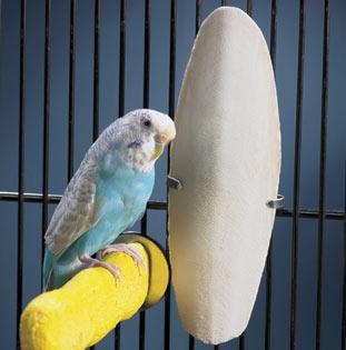 Kulit kerang berfungsi selain penambah mineral juga sebagai pengasah paruh burung