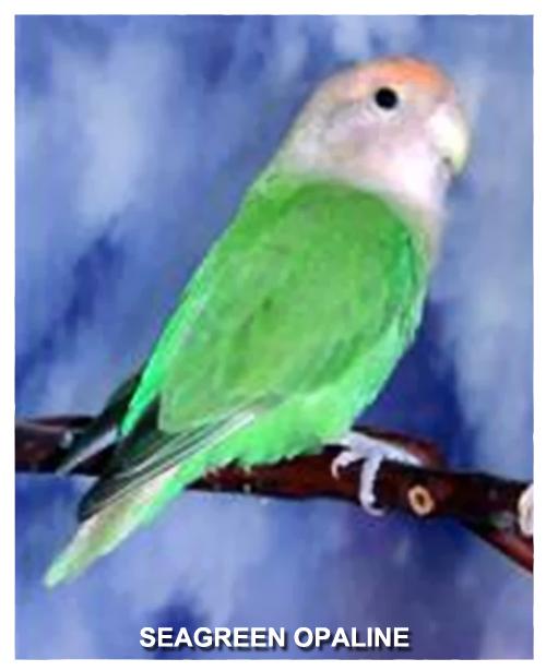 seagreen-opaline