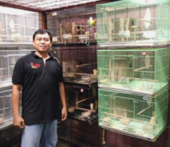 Anto di kandang penangkaran lovebird Ananta Bird Farm Sragen (foto: tabloid brn)