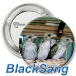 feat-blacksang