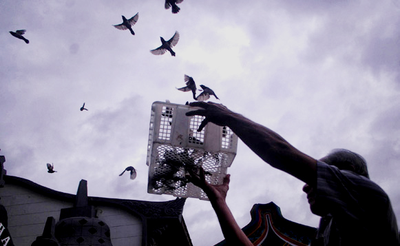 Tradisi melepas burung pipit dalam perayaan Tahun Baru Imlek.
