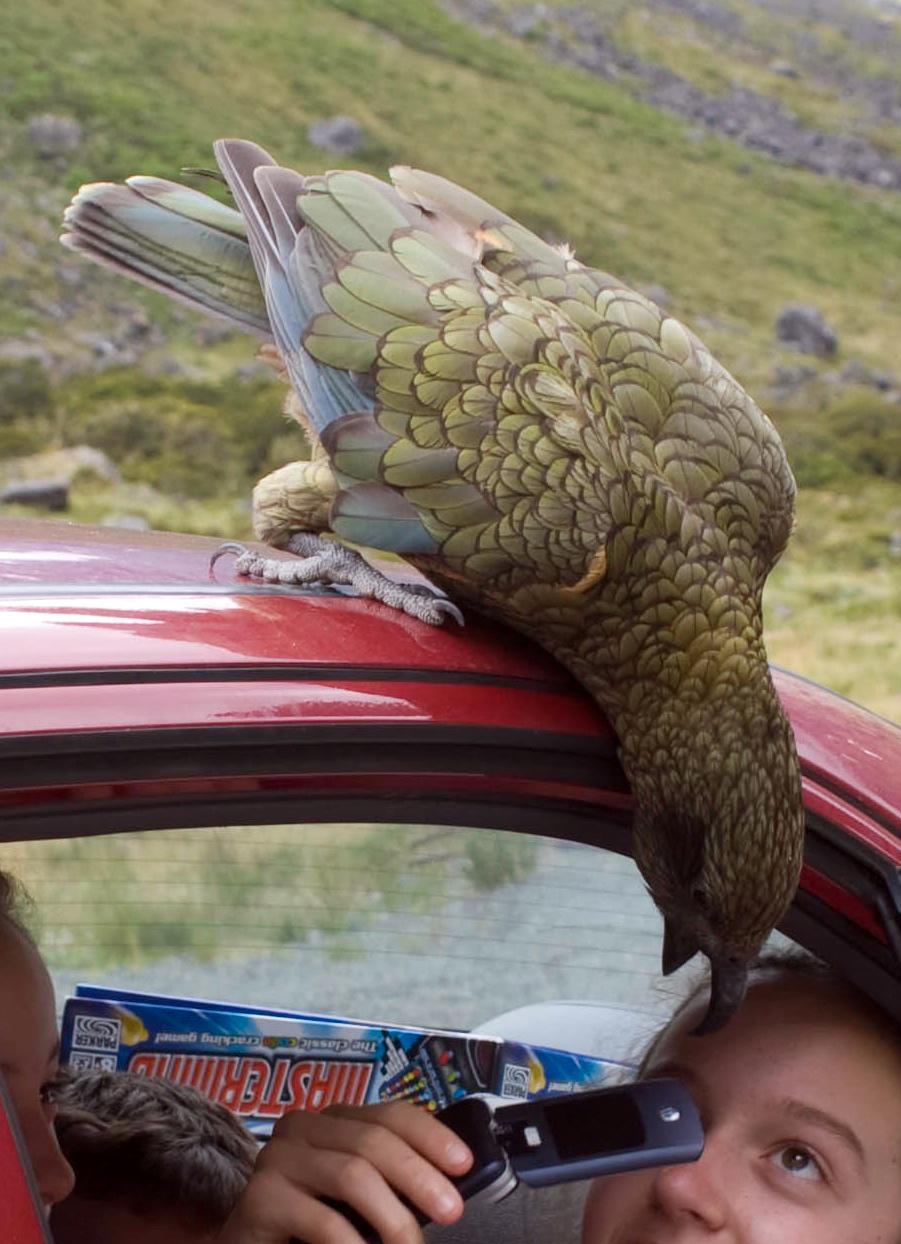 Nuri kea sering memasuki mobil melalui kaca jendela.