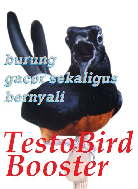 Pastikan burung Anda gacor sekaligus bernyali
