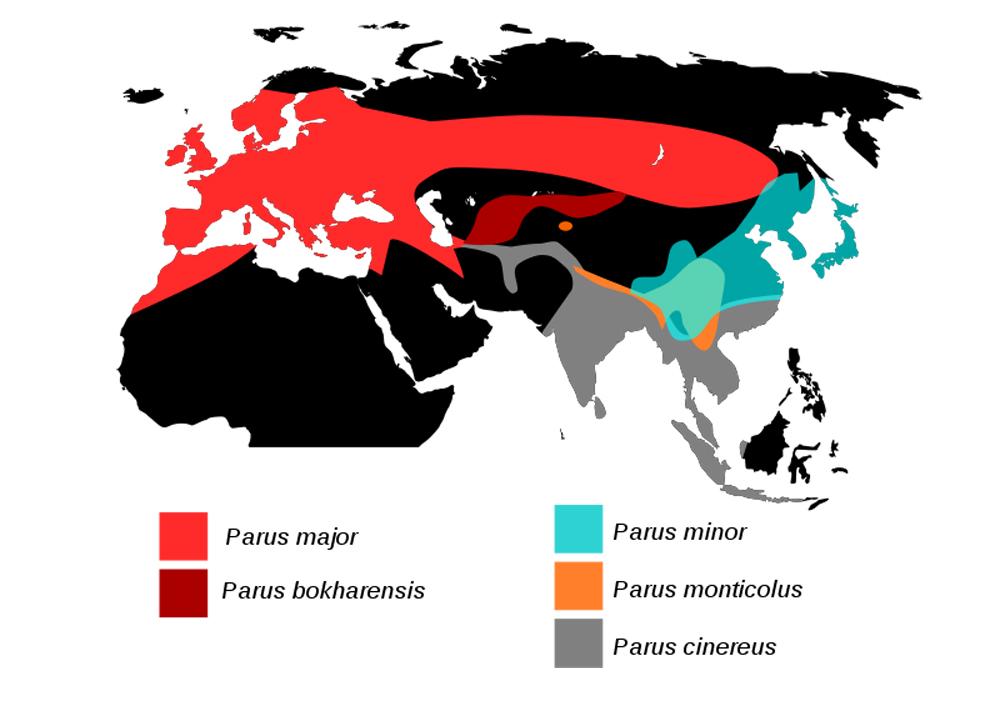 Peta sebaran gelatik batu di seluruh dunia