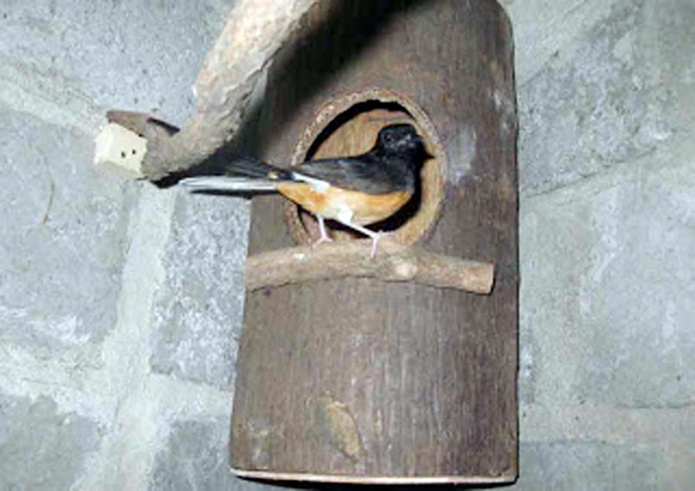 Sarang burung dari batang palem