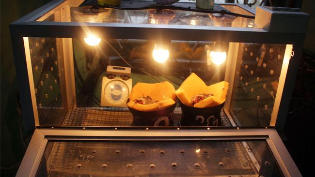 Inkubator anakan cucakrawa