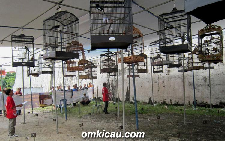 Suasana sesi kacer dalam kontes Samudra BC Bangko, Jambi, Minggu (3/2).