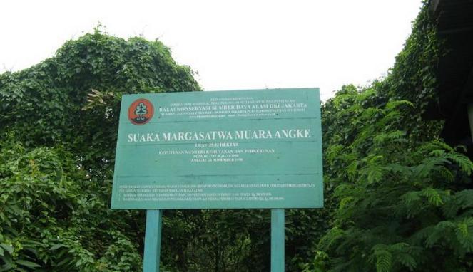 Muara Angke tempat penting untuk habitat burung di Pulau Jawa