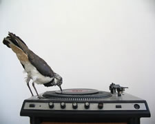 bird_record_player