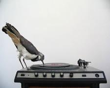 bird_record_player