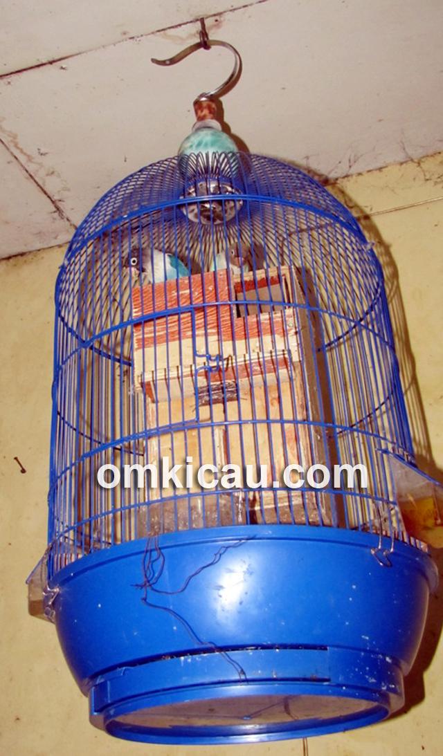HEMAT TEMPAT: Penangkaran lovebird menggunakan sangkar gantung.
