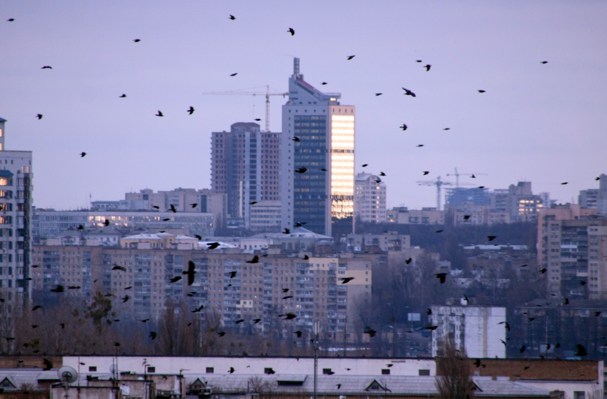 Kawanan burung di alam liar perkotaan.