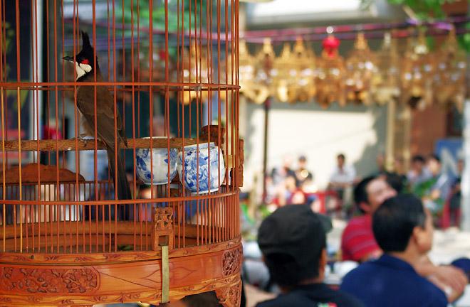 Hobi memelihara burung hias di Hanoi