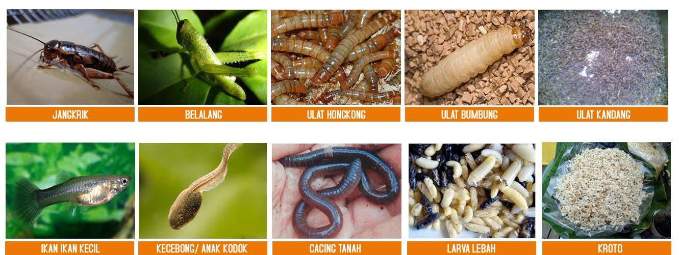 Beberapa alternatif EF untuk MB | gambar : muraibatuternak.blogspot.com
