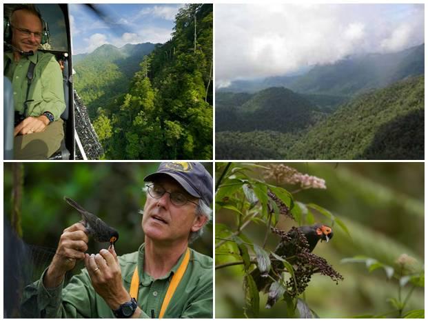 Ekspedisi FOJA yang dipimpin Bruce Beehler pada tahun 2005 menemukan spesis burung baru di tanah papua