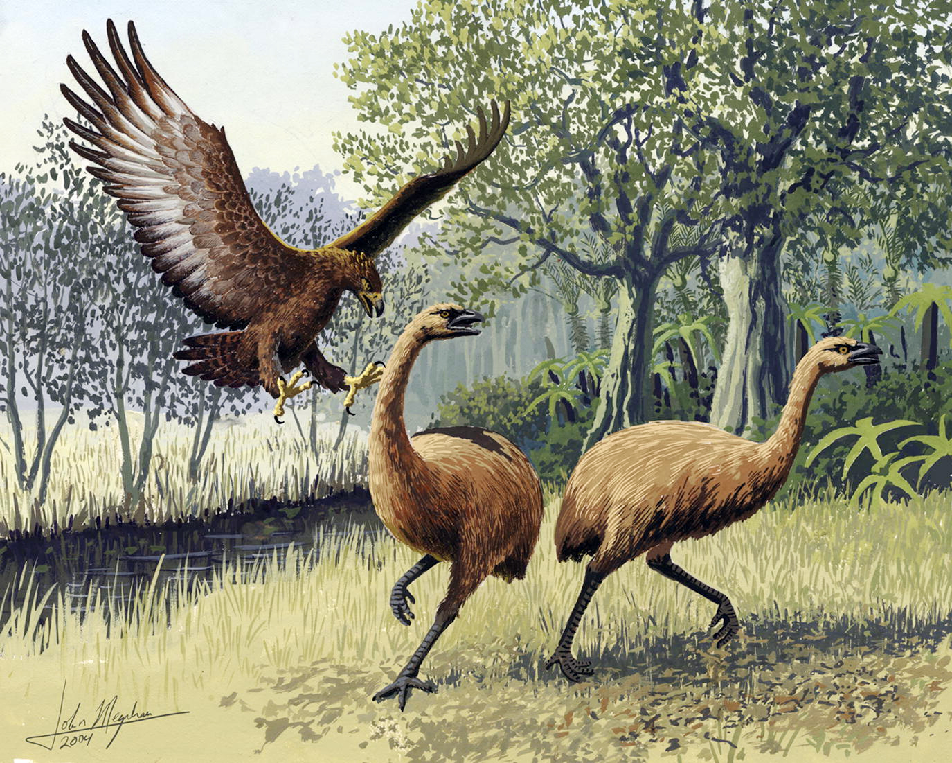 Ilustrasi elang haast mengejar burung moa.