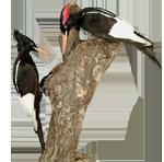 feat-burung-punah