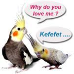 feat-cockatiel