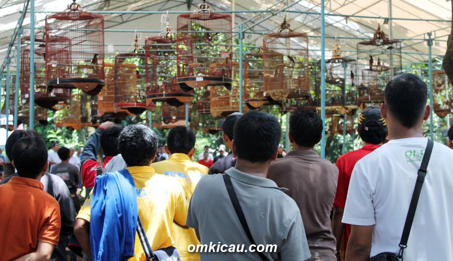 Suasana lomba murai batu dalam Cidodol Fiestas di Ragunan, Jakarta, Minggu (17/3) lalu.