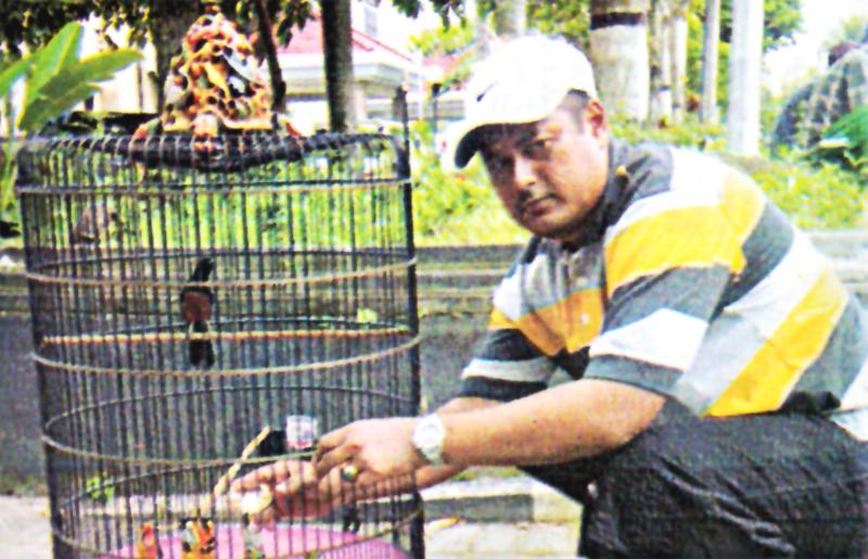 Om Giyono Gembul bersama murai blacktail, Ancaman.
