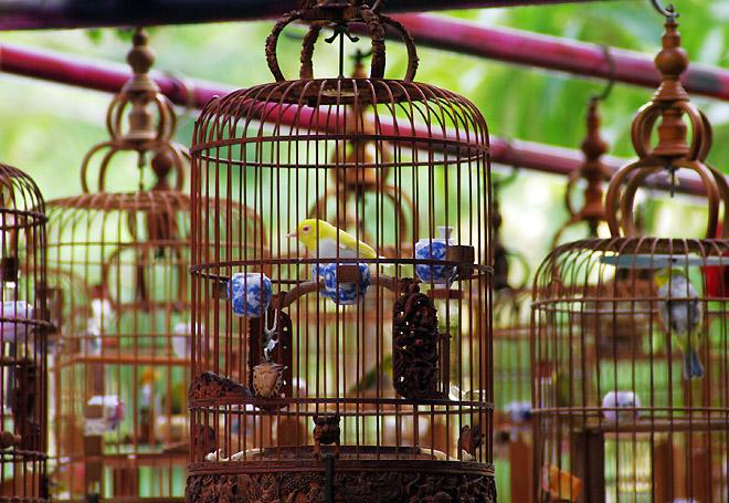 Burung pleci ini senilai USD 5.500