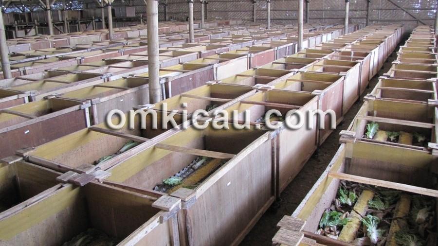 Favorit BF memiliki 1.200 kotak jangkrik, dengan produksi 100-200 kg/hari.