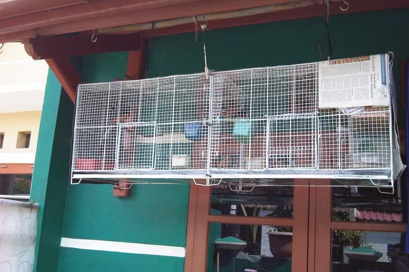 Kandang gantung penangkaran murai batu (foto: kicaumania.or.id)