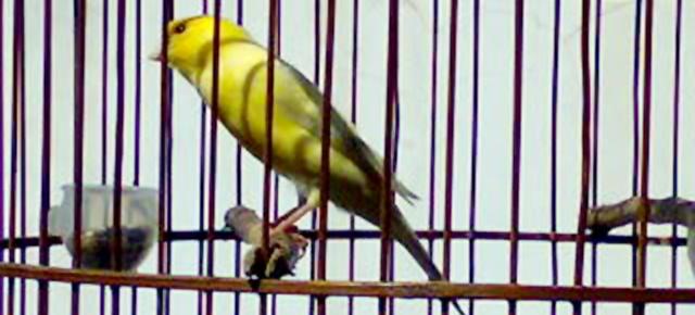 Burung yang harus menyesuaikan kita, bukan kita yang jadi budak burung