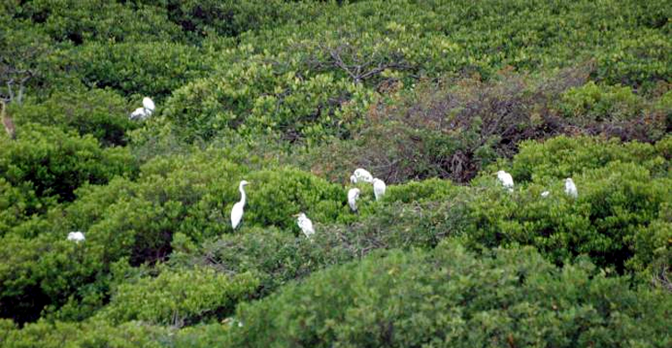Berkawan dengan burung di habitatnya.