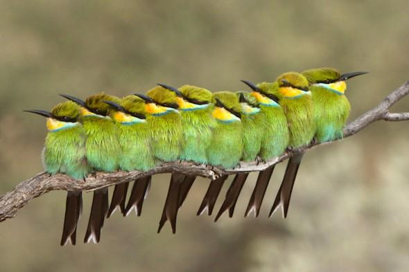 Burung senang berjemur pada pagi hari