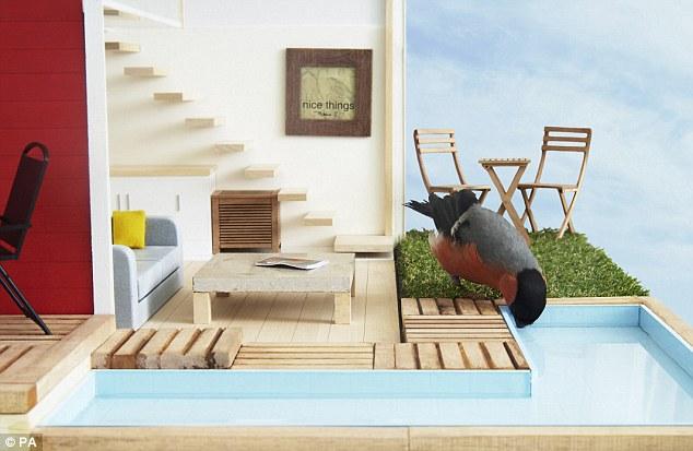 Grand Desain : Burung finch sedang menikmati kolam air yang tersedia di dalam rumah burung ini