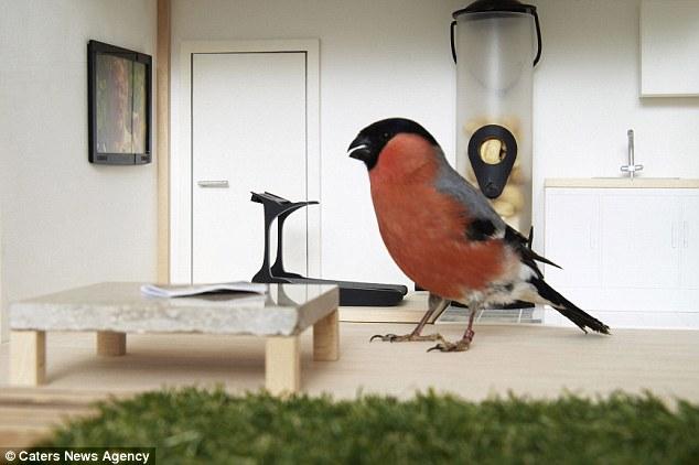 Makanan yang selalu tersedia pasti membuat burung semakin betah