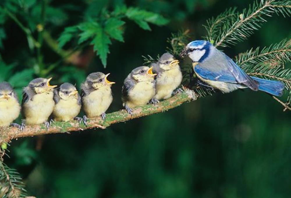 Induk betina bercengkerama dengan anak-anaknya.