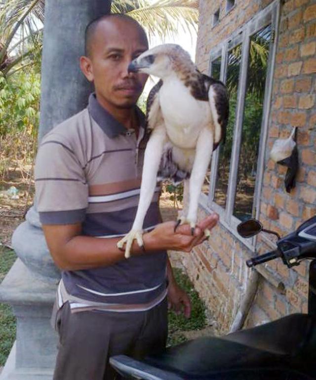 Seorang lelaki menawarkan elang brontok di internet.