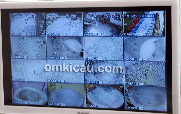 Semua perkembangan indukan terpantau melalui kamera CCTV.