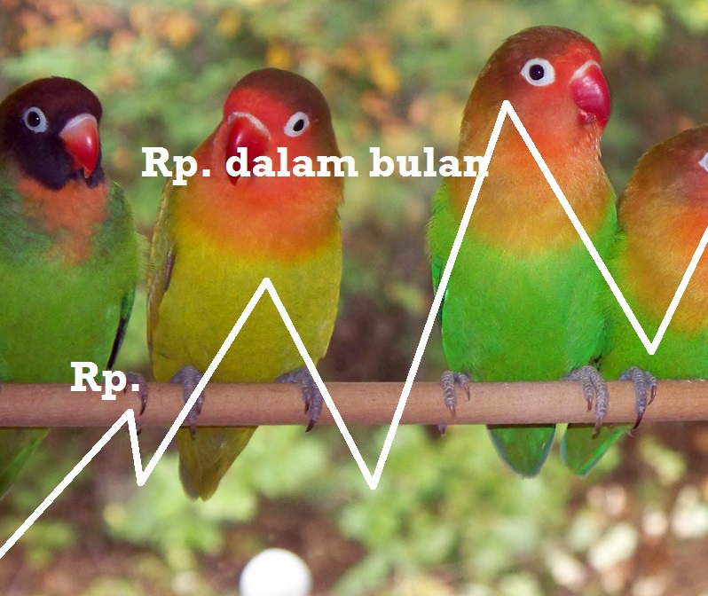 Perbedaan Pandangan Tentang Lovebird Merah (blorok Merah