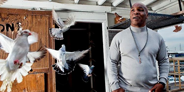 Tyson memelihara 350 ekor merpati di rumah kekasihnya.