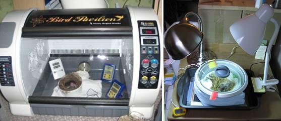 Perangkat brooder yang digunakan